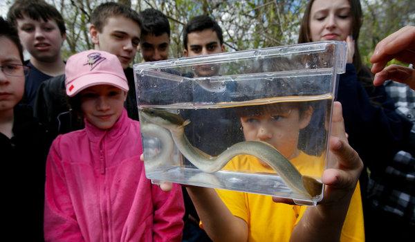 NYT Staten Island Eel