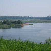 North Park Wetlands with restoration fence