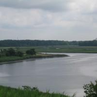North Park Wetlands after pilot restoration