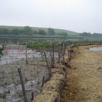 Restoration barrier fencing