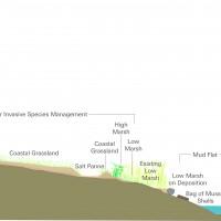Diagram of wetland restoration