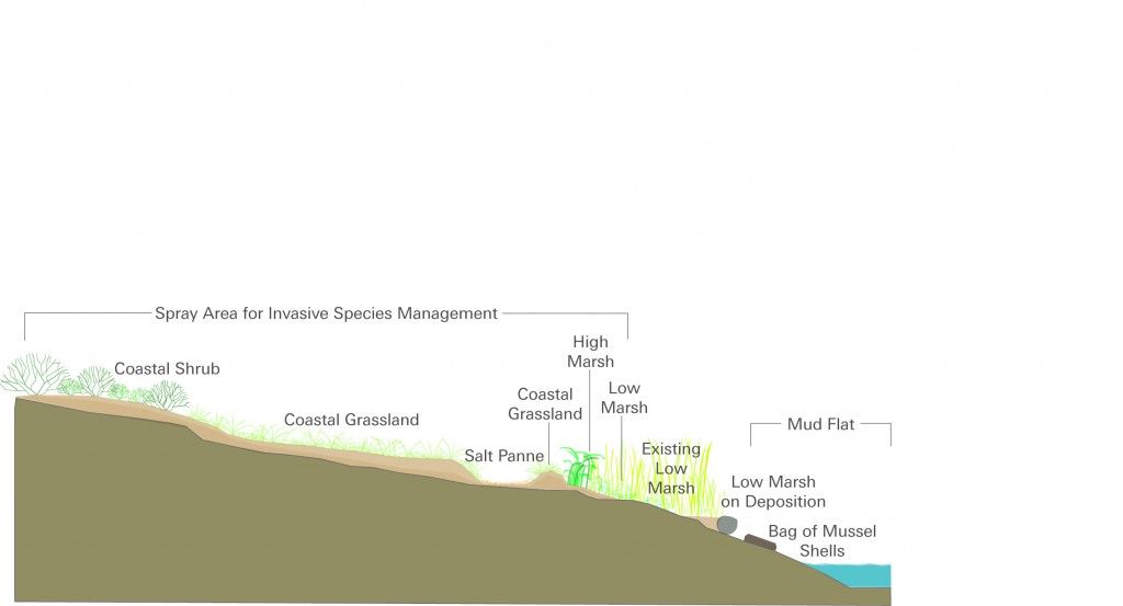 Wetland Restoration Diagram_Grace