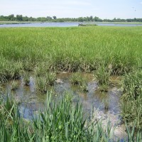 Wetlands conditions before restoration project