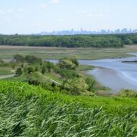 North Park Wetlands before restoration efforts