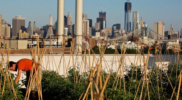feeding cities2