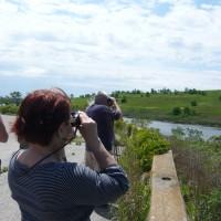 L-Events-birding