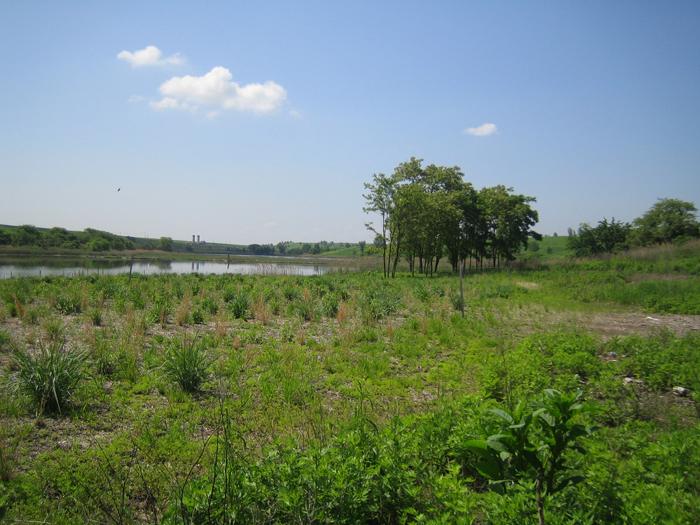 North Park Wetlands after restoration pilot project
