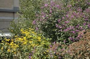 Highline flowers