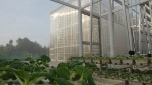 Sky Farm in Singapore