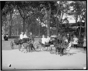 Goat drawn carriages in 1904