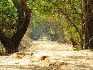 Courtesy of Vijaye Kulaye via Panoramio