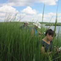 Freshkills Park wetlands