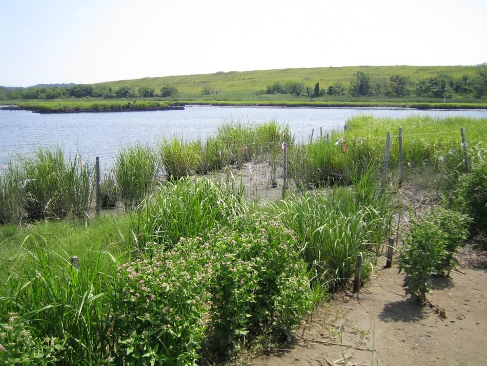 Wetland Restoration in Progress at Freshkills Park