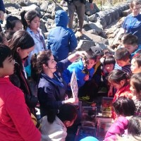 The program Rove the Cove allowed students to learn about the East River by acting as scientists and determining the water's salinity and dissolved oxygen.