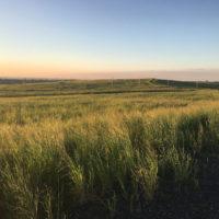 Grasslands Sunset