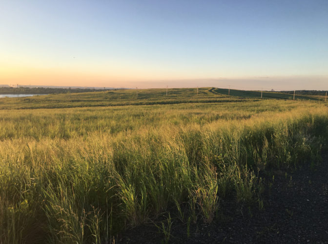 Freshkills Park Provides Habitat for Grassland Birds - Freshkills Park