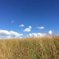 Grassland Research