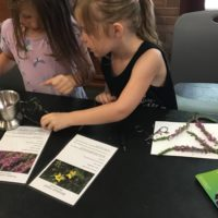 To make pigments, participants used petals from flowers from Freshkills Park.