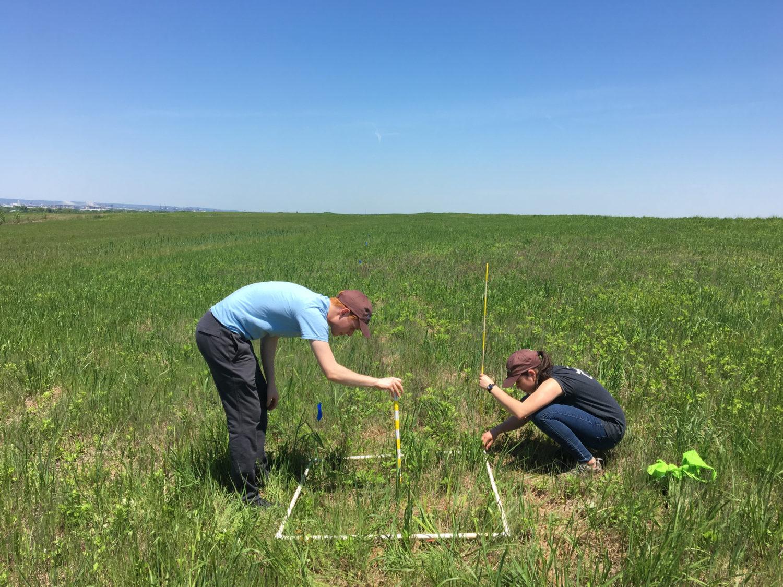 Grassland Research Fourth Year