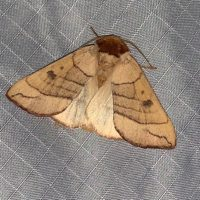 Mothing at Freshkills Park