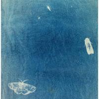 Cyanotype by Ash Ferlito